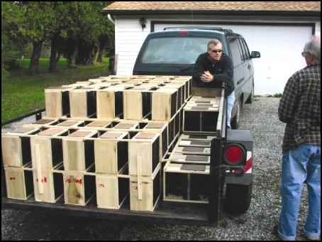 Boxes of honey bees ready for hives