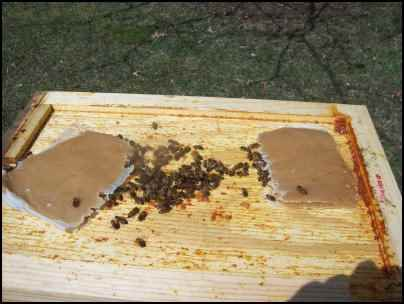 Preparing bees for winter