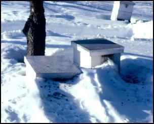 winter beehive bees