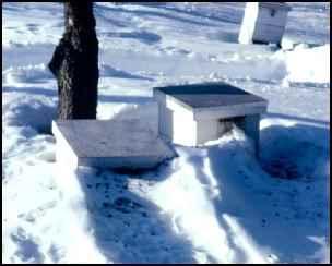 winter beehive bees