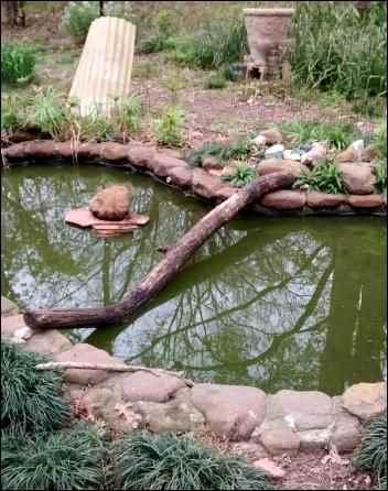 Building a Backyard Habitat