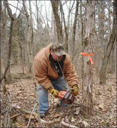 start a woodlot management plan