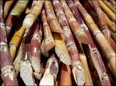 sugar cane, Keeping Sugar Off the Table, high fructose corn syrup, HFCS, is HFCS bad, dangers of sugar