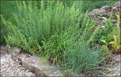 An herbs bed
