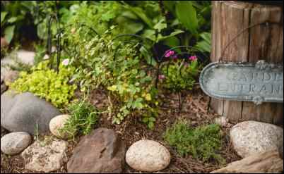 Edging with herbs and ornamentals