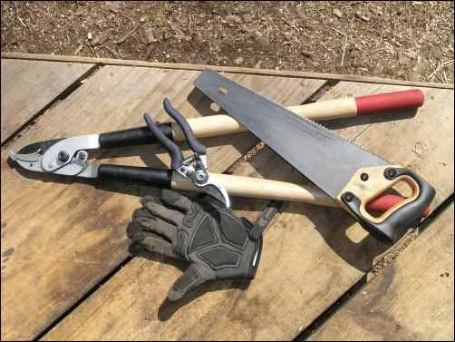 branch lopers and hand saw