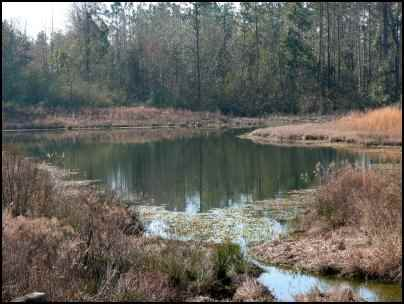 Building Multi-use Ponds on the Homestead, Where Should a New Pond Go, Benefits of a Multi-use Pond, what fish should be stocked in a pond, multi use pond, homesteading