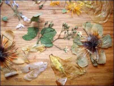 making soap, making paper,, pressing flowers, avoiding homestead burnout, homesteading burnout