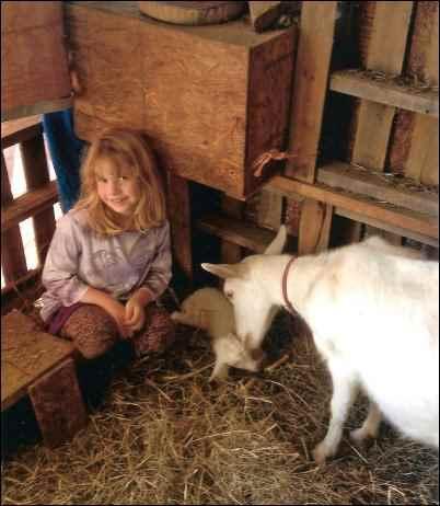 homestead kids goat