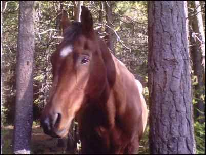 pet rescue horse