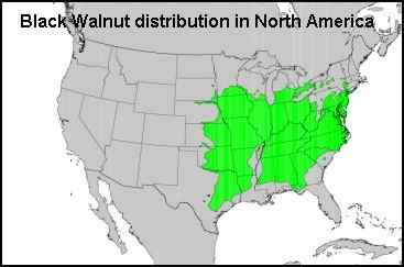 Black Walnuts distribution map