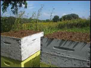 american bee hive