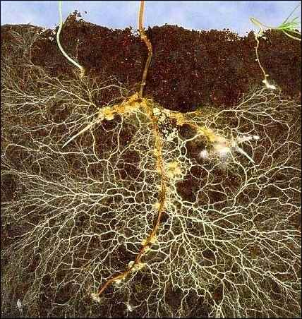 Farmers of Fungi Growing Mushrooms and Mycorrhizae in Your