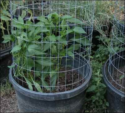 container gardening, homesteading