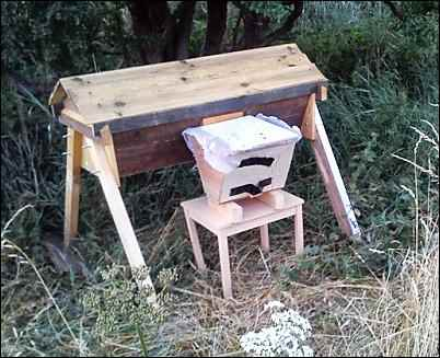 Bees for Free, collecting bee swarm, homesteading, homestead, homestead.org