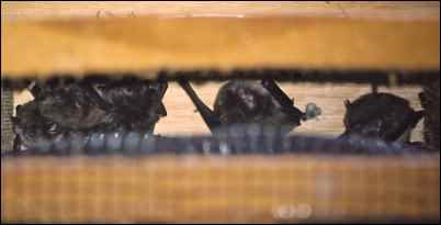 A look inside a bat house