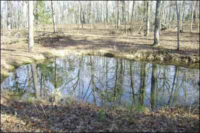 Attract Wildlife to Your Property with a pond