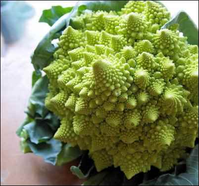 Romanesco broccoli, Weird Things to Grow and Market on the Homestead, homesteading