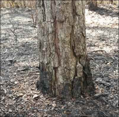 Prescribed Burns to Prevent Wildfires, homesteading, homestead