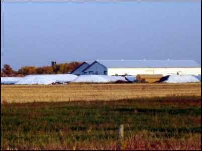 country neighbors dairy