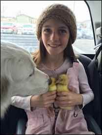 Girl with dog and geese